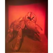 Голограмма художественная Краб фото