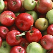 Яблоки разных сортов фото