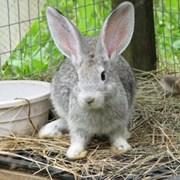 Комбикорм для кроликов гранулированный фото