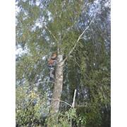 Обрезка, удаление деревьев фото
