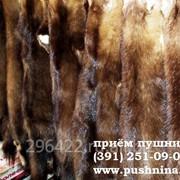 Закупка:мех росомахи фото