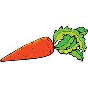 Морковь кормовая фото