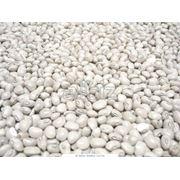 Культуры кормовые бобовые фото