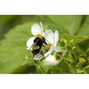 Система биологической защиты растений фото