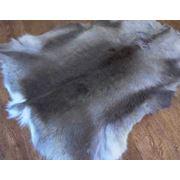 Шкуры финского оленя фото