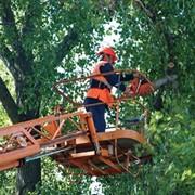 Кронирование деревьев (обрезка веток) с помощью мехруки фото