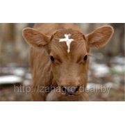Заменитель цельного сухого молока Лактолюкс фото
