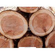 Рынок лесопродукции фото