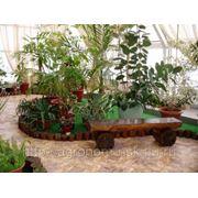 Услуги по созданию зимнего сада фото