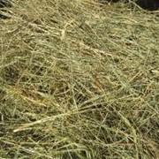 Сено/пшеничная солома – 760 грн/тонна. Возможен экспорт. фото