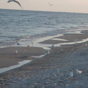 Участок у моря СРОЧНО фото