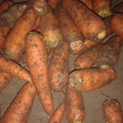 Продам морковь большую и среднюю Крым фото