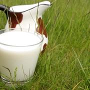 Заготовка, переработка и реализация молочной продукции фото