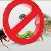Знищення щурів' мишей, тарганів, молі, клопів, бліх фото