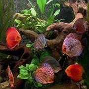 Дизайн аквариумов фото