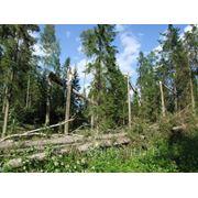 Лесопатологические обследования лесных участков фото