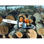 Спил, опиловка, кронирование, корчевание деревьев. Корчевание пней. фото