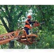 Предлагаю Грамотно спилить дерево, обрезать ветви,выкорчевать пни,вывезти мусор. фото
