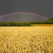 Продукты сельскохозяйственные зерновые культуры корма для животных продам фото