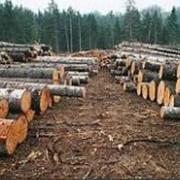 Рубка леса фото