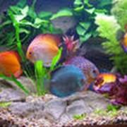 Рекомендации по содержанию и совместимости рыб фото