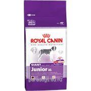 Корм Royal Canin Д/Собак Джайнт Юниор 15кг. фото