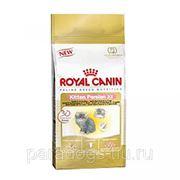 Корм Royal Canin Д/Кошек Киттен Персиан 2кг. фото