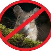 Избавиться от мышей, крыс фото