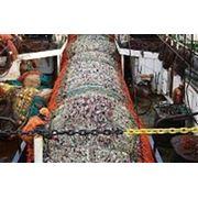 Матросы для работы в море. фото