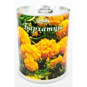 Бархатцы Bontiland растение в банке, (77003) фото