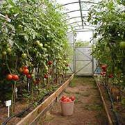 Технологическое сопровождение проектов по выращиванию овощей фото