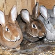 Комбикорм для кроликов откорм фото