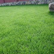 Озеленение, усадьба газонов фото