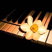 Обучение игре на музыкальных инструментах, игра на фортепиано фото