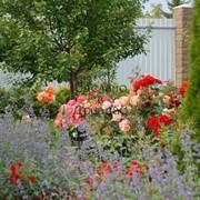Авторское озеленение Вашего сада фото