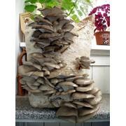 Готовые грибные блоки фото