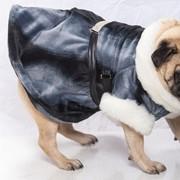 Шуба для собак фото