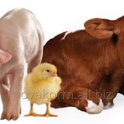 Кормовая добавка АОКС жидкий для предотвращения окисления жиров и жирорастворимых витаминов в кормах и кормовом сырье для сельскохозяйственных животных фото