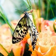 Романтический вечер - поздравление бабочками фото