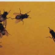 Дезинсекция, дезинфекция, уничтожение насекомых, клещей, мух, муравьев фото