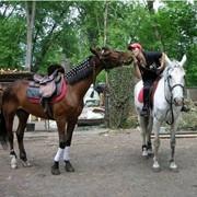 Конные прогулки, прогулки на лошадях (Кременчуг Полтавская область) фото