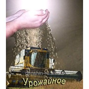 Высококачественная очистка семян. фото