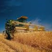 Уборка зерновых фото