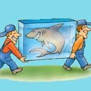 Услуги по транспортировке аквариумных рыб фото