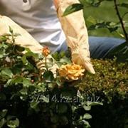 Комплексный уход за садом фото