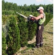 Услуги профессионального садовника фото