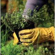 Работы по высадке деревьев и кустарников по Киеву и области. фото