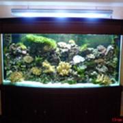 Декорации для аквариума фото