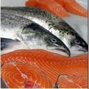 Лосось и другая рыба морская мороженая разные виды в ассортименте возможен экспорт фото