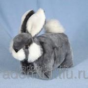 Кролик Соня С987 фото